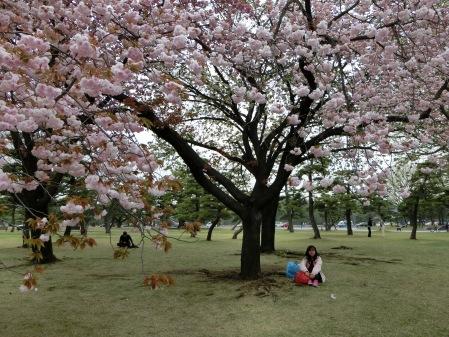如那天櫻花正開